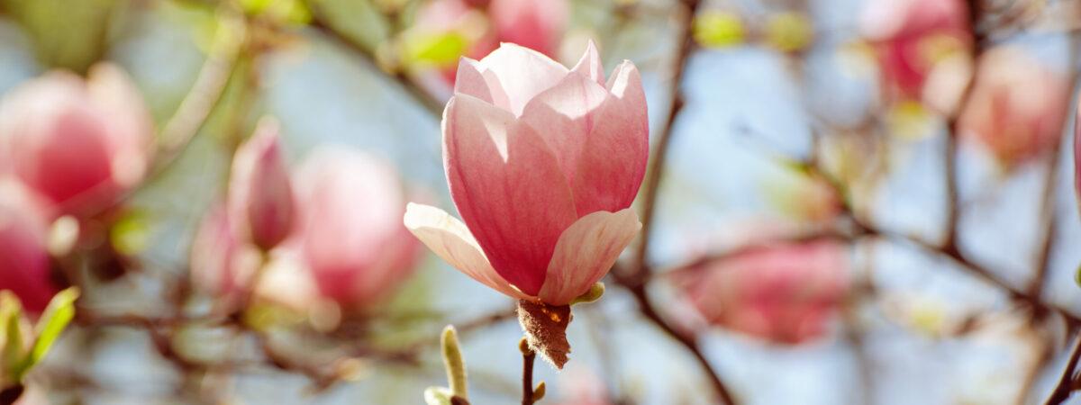 Präsenzgottesdienst im Garten zur Semestereröffnung – ökumenisch